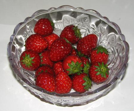 イチゴ飼育開始