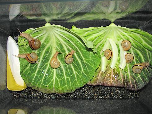 カタツムリの飼育ケースを春モードに変更