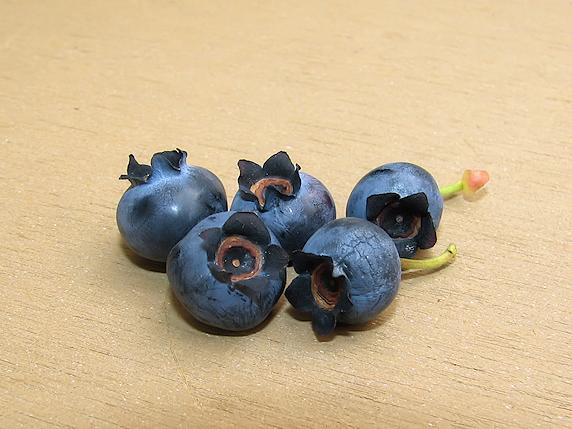 ブルーベリー5個を収穫