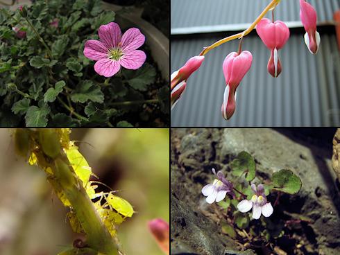 春の家の庭