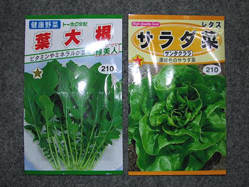 カタツムリ用のサラダ菜と葉大根開始