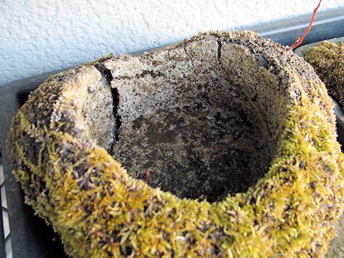 軽石鉢の凍結破壊