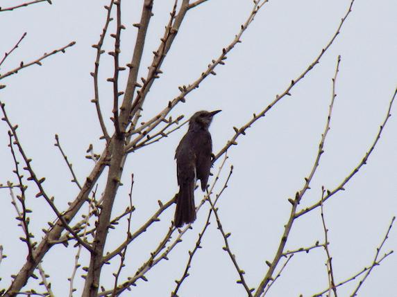 鳥を撮りたい
