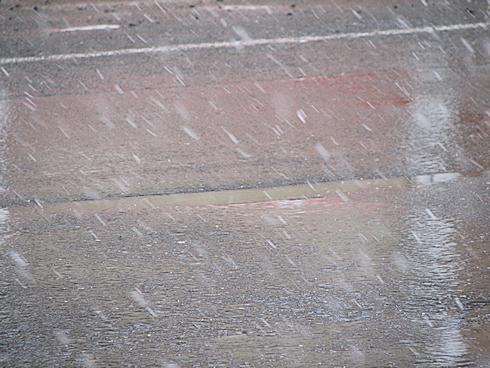雪をかぶる苔