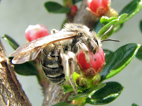 昆虫に大人気のベニシタンの蜜