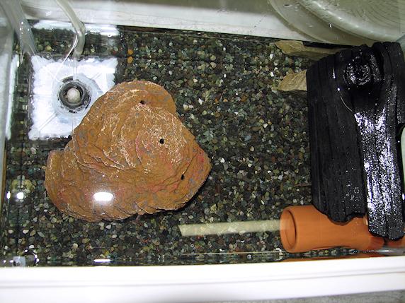 サワガニ水槽を掃除するの巻