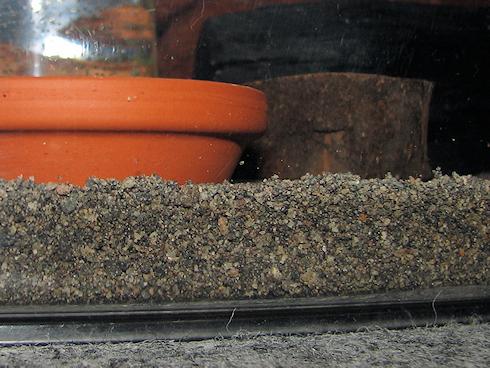 エンマコオロギの飼育環境整備