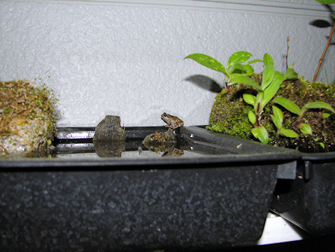 3匹目のカエル登場