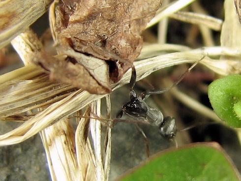 アリ同士の死闘の結果