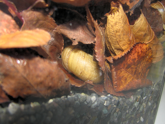 枯れ葉の中で冬眠中