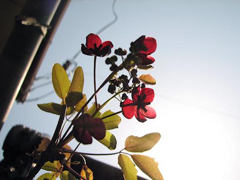 家の庭のしっとりとした花たち