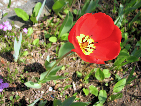 家の庭のにぎやかな花たち