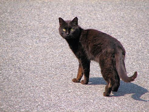 黒猫のひとりごと