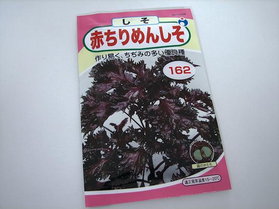 赤紫蘇栽培開始