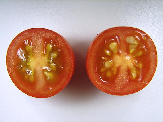 ミニトマトの初めての収穫