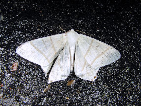 4種類の蛾
