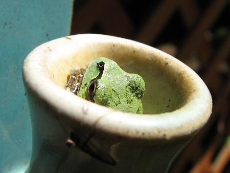 写真館-壷の中のカエル
