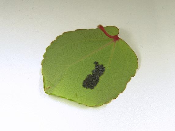 虫の卵を調査中に突如孵化!