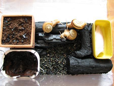 カタツムリの飼育ケース清掃