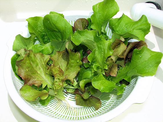 サラダミックスの収穫1回目