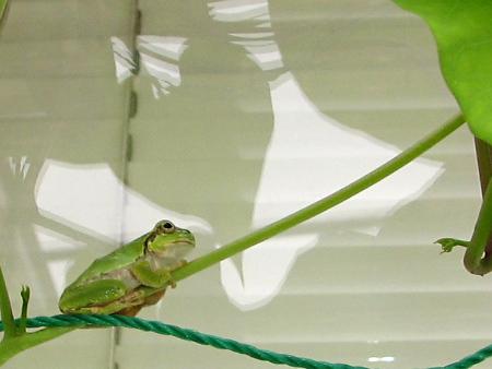 写真館-時を待つカエル
