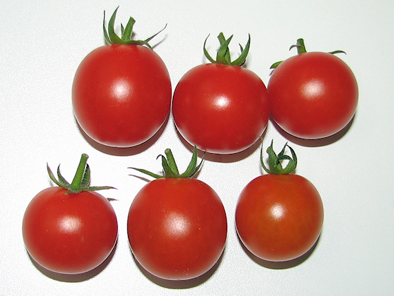 ミニトマト6個収穫