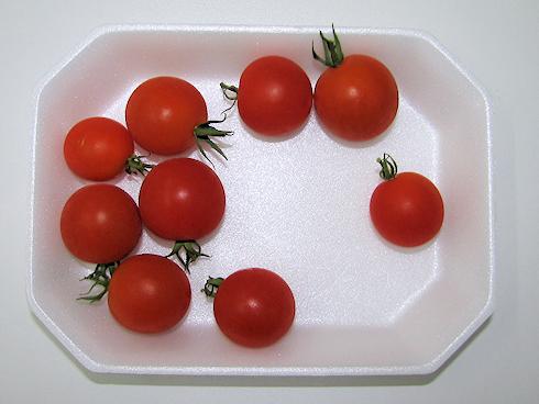 ミニトマト9個収穫