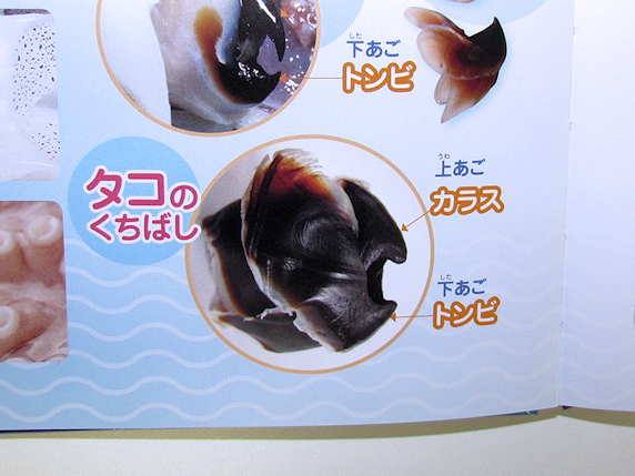 「イカとタコの大研究」に画像が掲載されました