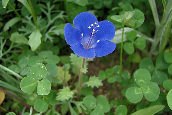 野原風花壇に花が咲く