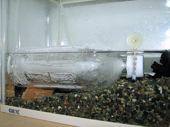 サワガニ水槽の水温と室温