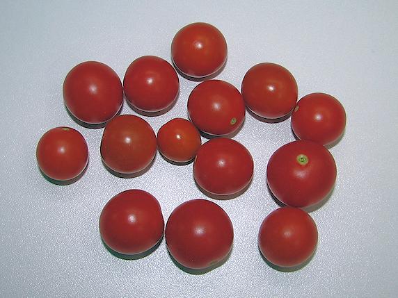 ミニトマト14個収穫