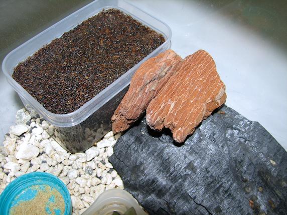 エンマコオロギに産卵床を投入