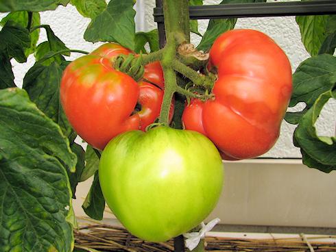 栄養障害の果実を除去