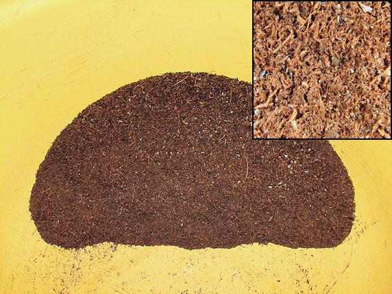 エンマコオロギの産卵床を用意