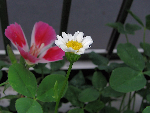 新たに3種の花が咲く