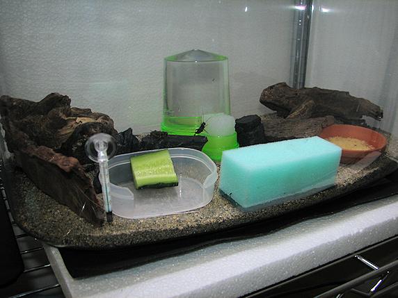 コオロギ飼育の配置換え