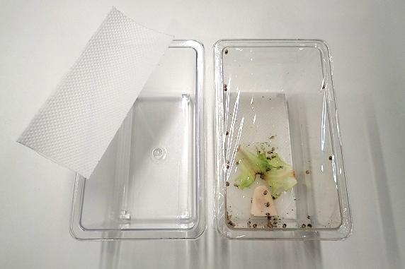 カタツムリ赤ちゃんケースの掃除