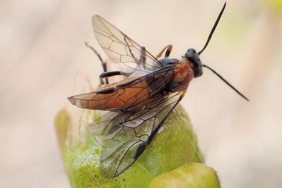 虫を捕獲するツツジのつぼみ