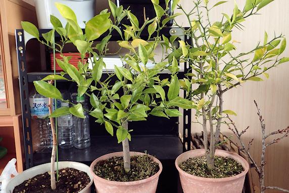 車庫の中の植物たち