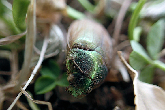 野原風花壇の草刈と根付く昆虫