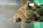 確保中のウワバ幼虫が羽化