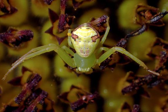 ヒマワリの花の虫たち