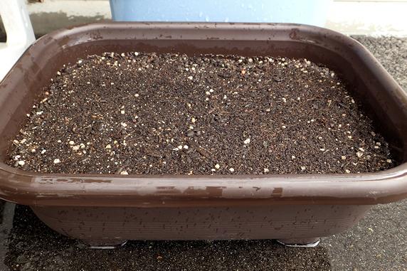 ミニシクラメンの種蒔き
