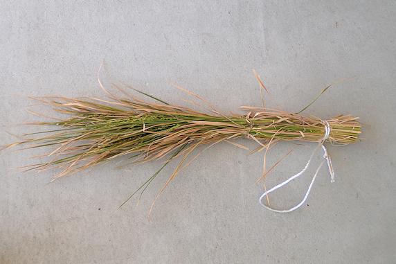 バケツ稲の稲刈りを実施