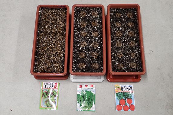 葉野菜の種蒔き実施