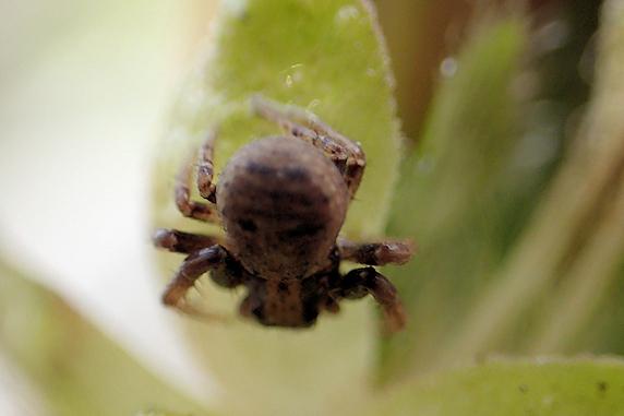 虫を捕獲するツツジのつぼみ 2016