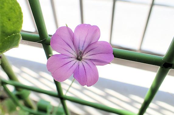 野原風花壇に咲いている花