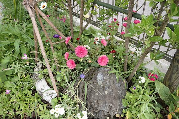 秋の花が咲く野原風花壇