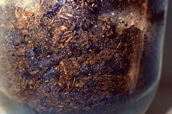 マットを食べるカブ幼虫