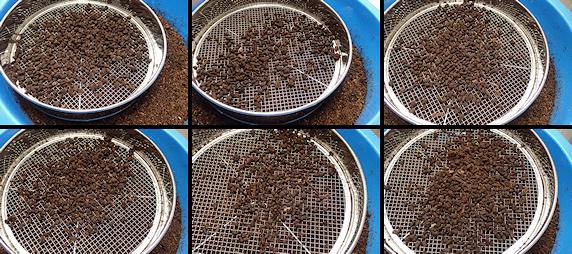 カブ幼虫の飼育環境を一新